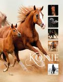 Konie_160