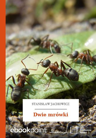 Okładka książki Dwie mrówki