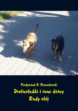 Okładka książki/ebooka Drobnoludki i inne dziwy. Rudy zbój